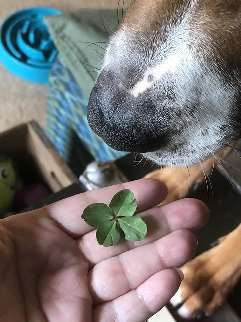 Found a Four Leaf Clover