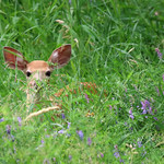 I'm Very Fawn'd Of You