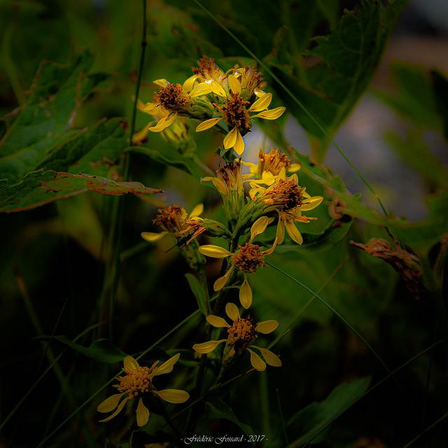 Guirlande Fleurie
