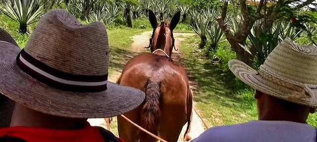 MEXIKO, Yucatán , Hacienda Sotuta de Peón, Sisalplantage, Mit der Pferdeschienenbahn, 19117/11778
