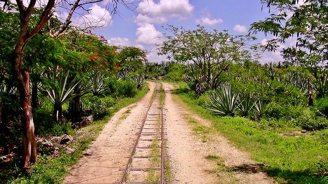 MEXIKO, Yucatán , Hacienda Sotuta de Peón, Sisalplantage, 19116/11777