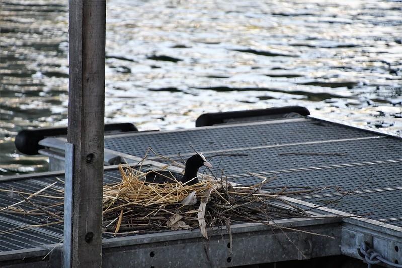 Duck Nest 23.07.2019