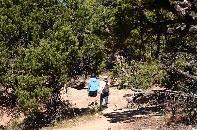 North Vista Trail (North Rim) (59)