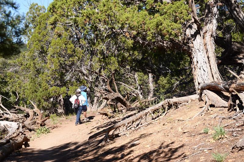 North Vista Trail (North Rim) (33)