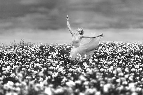 Poppies # 01