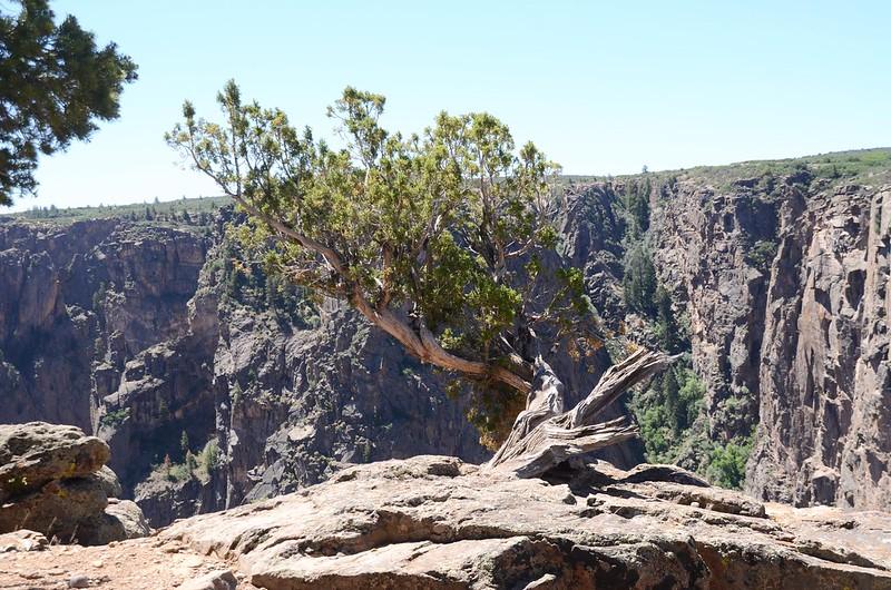 Chasm View Nature Trail (North Rim) (26)