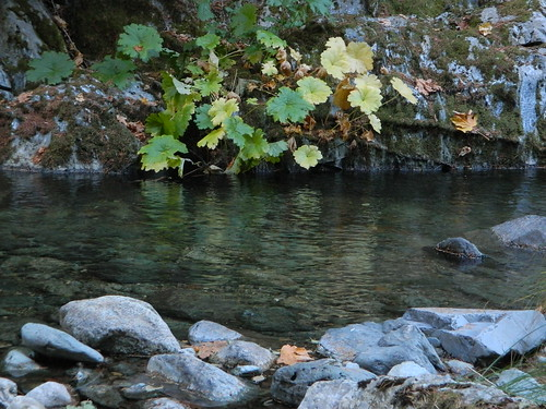 Autumn Creekside