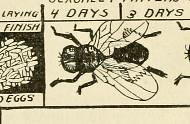 This image is taken from Page 36 of Bulletin of the North Carolina Board of Health [serial], v.28:no.1-5(1913)