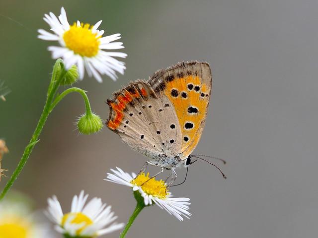OMD EM1 7.24.2019 butterfly 2