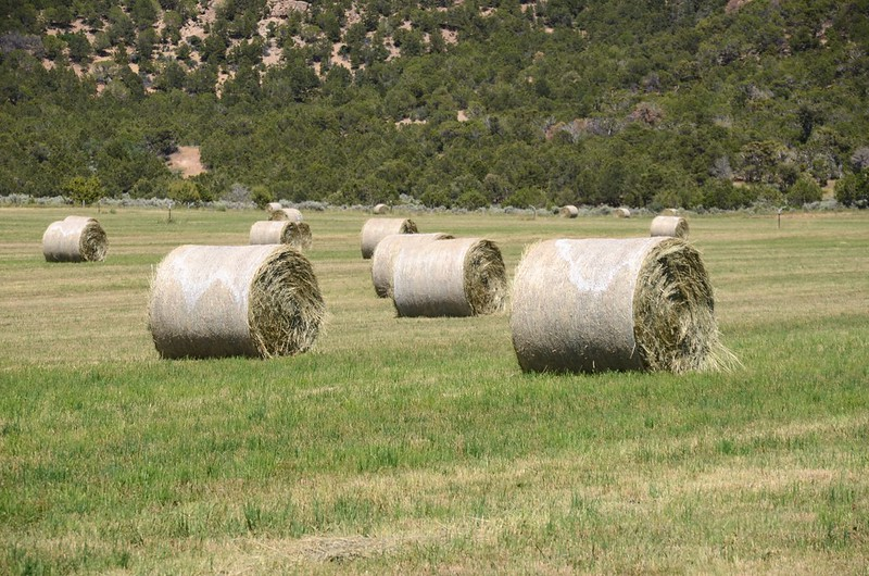 Hay Roll on the field (4)