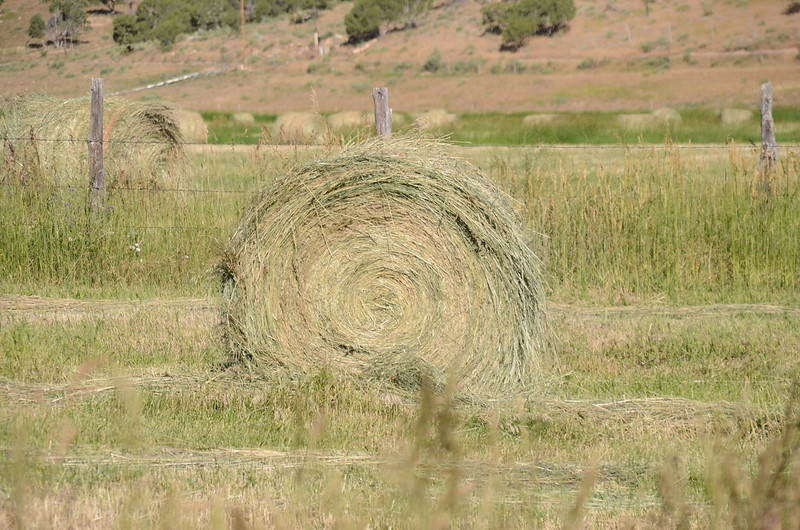 Hay Roll on the field (15)