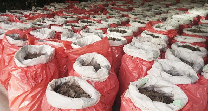 2019/07/23 新加坡當局查獲史上最大宗象牙走私案,象牙和穿山甲鱗片都藏在申報裝載木材的貨櫃中。