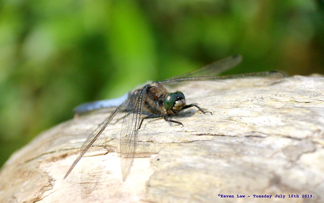 Dragonfly............