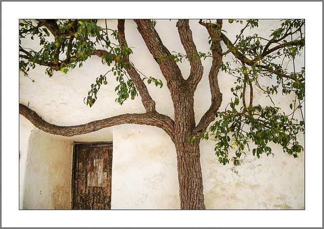 Der alte Birnbaum (The old pear tree)