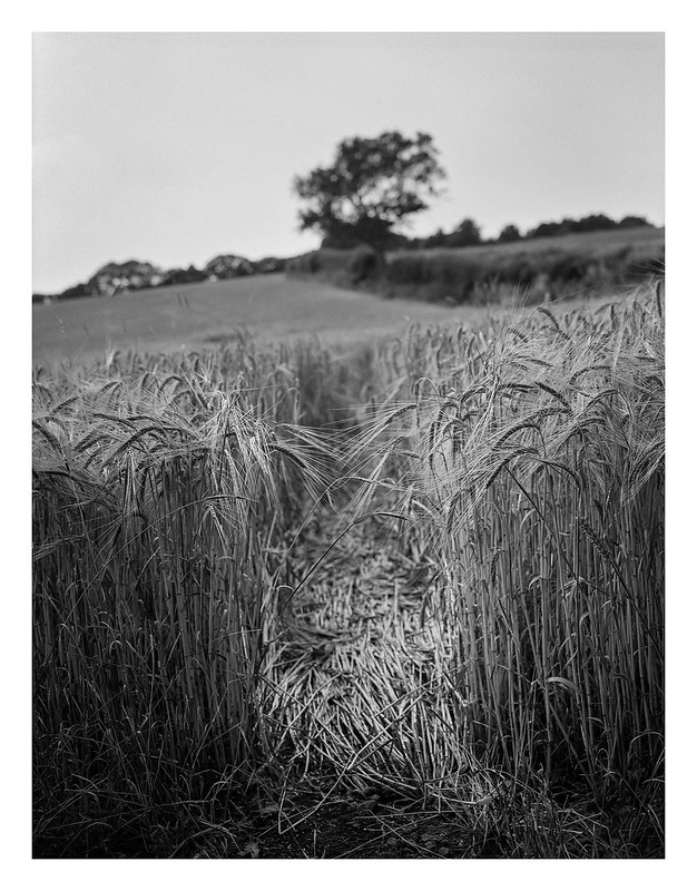 FILM - A path through the barley