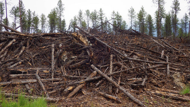 Wood waste that can be converted into biochar