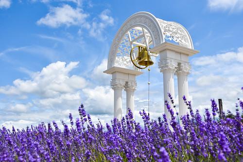 日の出ラベンダー園 日の出公園 日出公園 薰衣草 lavender 富良野 furano hokkaido 北海道 上富良野