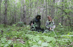 After successful installation of the traps in the secondary aspen forest