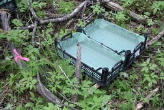 A leaf trap installed in old growth forest