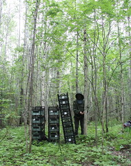 Installation of leaf traps in secondary aspen forest