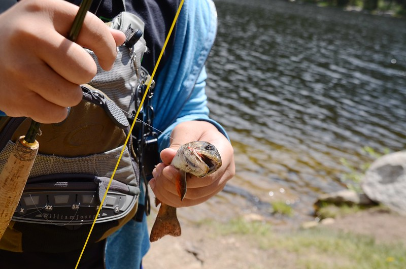 Fly fishing, Idaho Springs Reservoir  (17)