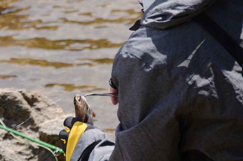 Fly fishing, Idaho Springs Reservoir  (14)