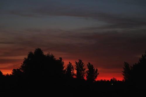 sunrise zonsopgang sonnenaufgang leverdusoleil red rood rot rouge rosso rojo trees bomen arbres bäume sky lucht ciel luft wolken nuages nubes clouds ruisbroek kleinbrabant puurs vlaanderen flanders flandres belgië belgien belgique belgium belgica