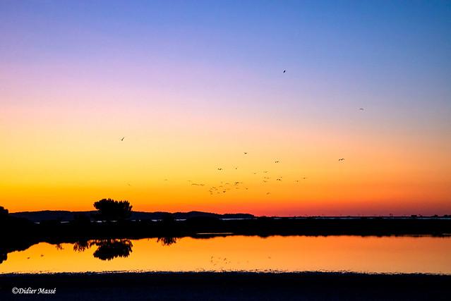 Vol d'oiseaux sur l'étang au lever du soleil
