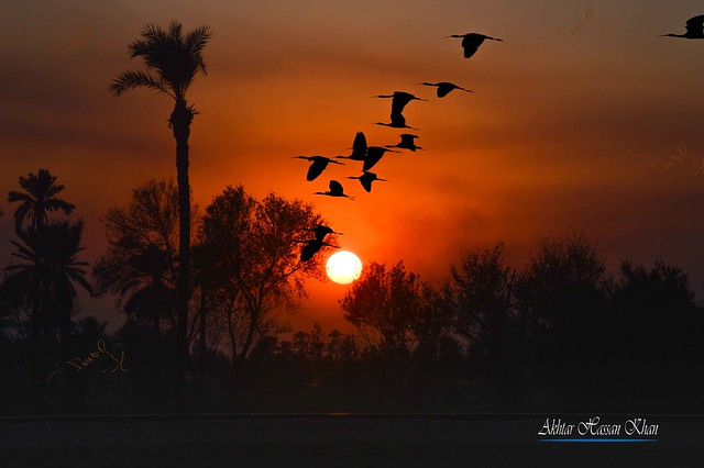 sunset and birds flying