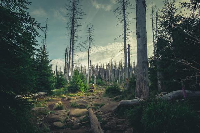 Eckerlochstieg im Harz