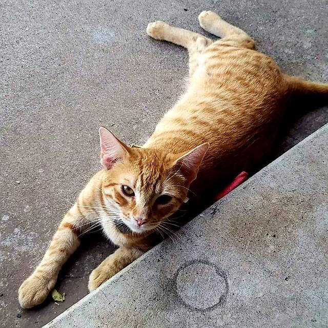 Random cat