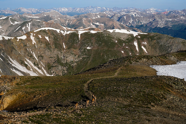 Mule Deer at 14,000 Feet!