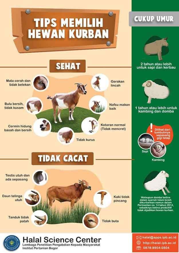 tips-dan-cara-memilih-hewan-kurban