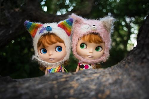Two Kitty Kats