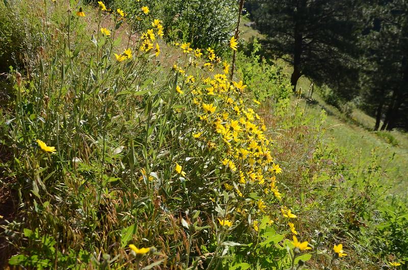 Mesa Trail (3)