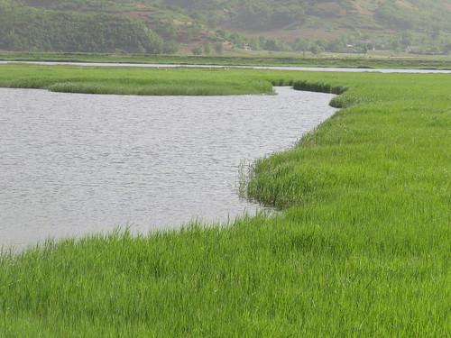 EAAF044 Kumya Wetland Reserve