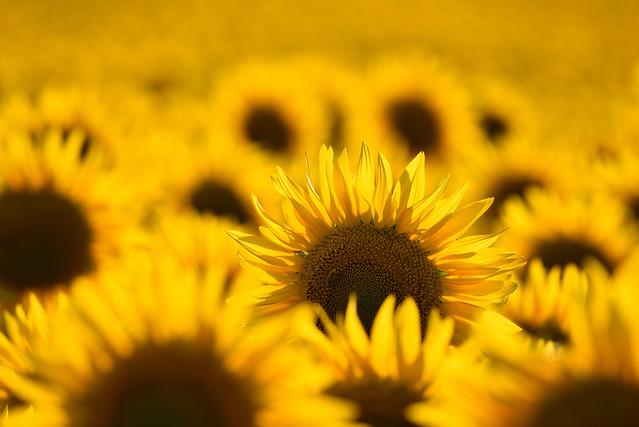 Comme un écho au soleil (2)