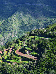 Laurel forest and terraces, Anaga, Tenerife