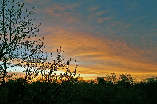 sunrise sunrisephotography trees sky cloudsandsky clouds gold bereaohio