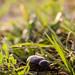 خنفساء  beetle