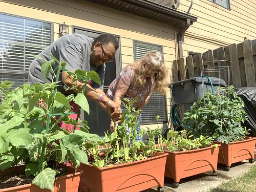 Bernice Pollard and Sandy McCarthy examine plants