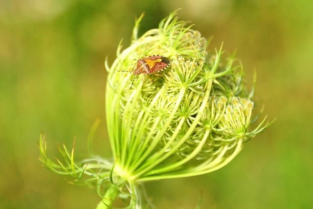 Juli 2019 ... Fischkinderstube Edingen-Neckarhausen ... Botanik ... Fotos: Brigitte Stolle