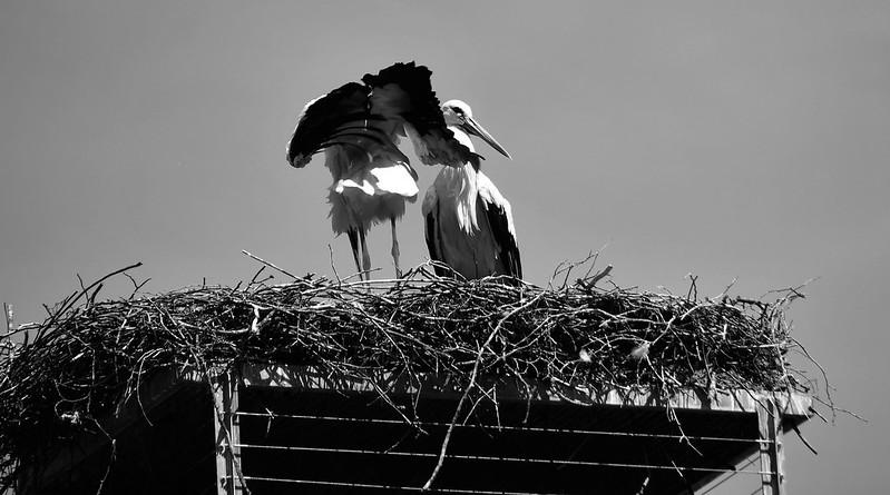 Storks 23.07 (9)