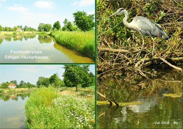 Juli 2019 ... Fischkinderstube Edingen-Neckarhausen ... Fotos: Brigitte Stolle