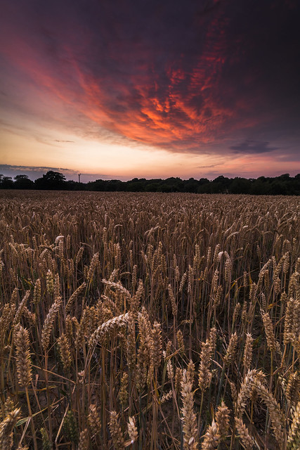 Lower Beeding Sunset - Sussex