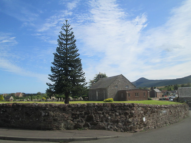 Monkey puzzle and Strathmiglo  Kirk