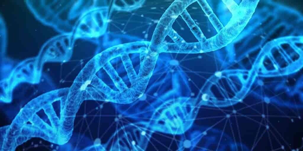des-variations-génétiques-permettent-des-sauts-évolutifs