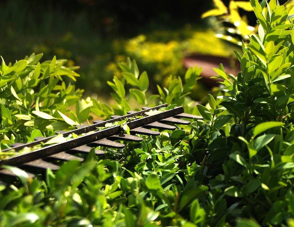 Gardener-Near-Me-Collaroy-NSW