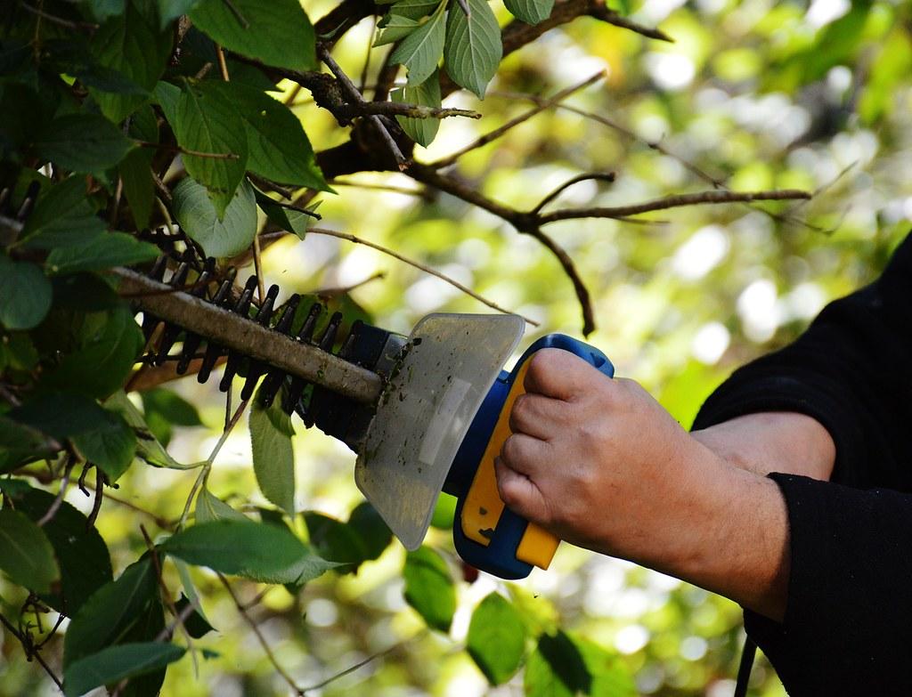 Garden-Maintenance-Companiy-Collaroy-NSW