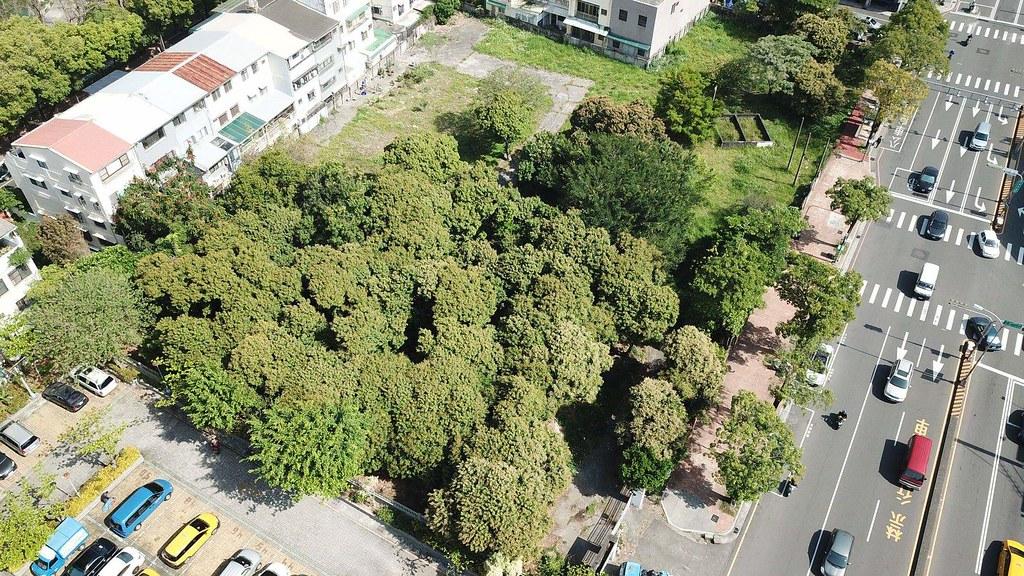 台中市北屯區的百年荔枝森林。來源:搶救百年荔枝森林粉絲專頁
